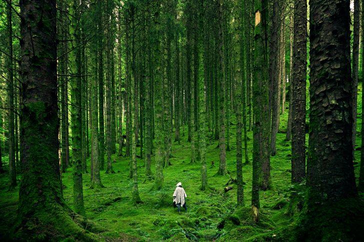 Natuurgebieden in België